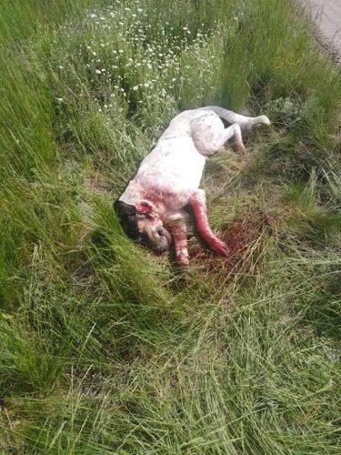 На Черкащині нетверезий чоловік убив собаку на очах у 8 маленьких діток (фото 18+)