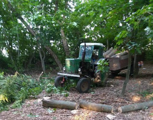 На Черкащині крадії лісу спиляли дерева (фото)