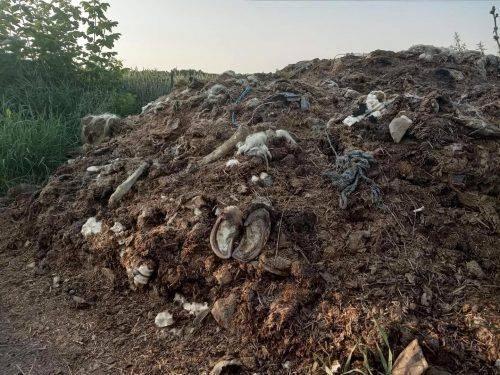 На Черкащині містяни виявили у себе на городі тонни тваринних решток (фото)