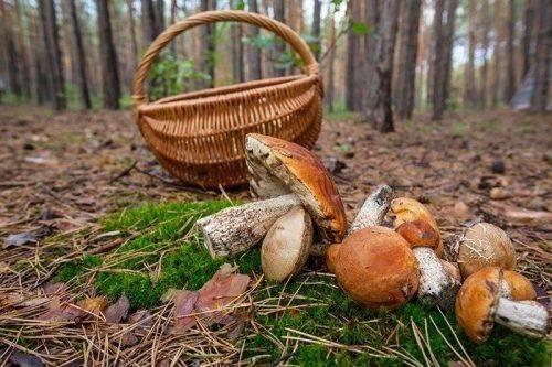 За добу на Черкащині дві особи отруїлися грибами