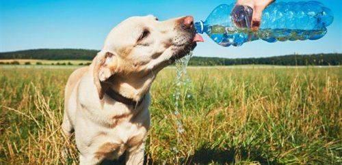 Через сильну спеку на Черкащині в повітрі накопичуються шкідливі речовини