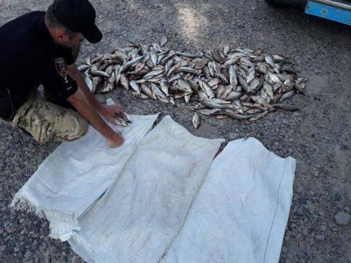На Черкащині браконьєри наловили риби на майже 65 тисяч гривень (фото)