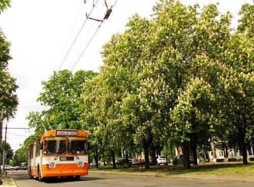 Деякі черкаські тролейбуси рухатимуться за зміненим маршрутом до понеділка