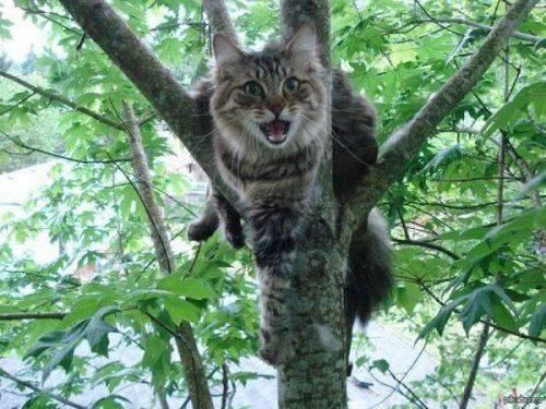 У Черкасах з дерева знімали кота