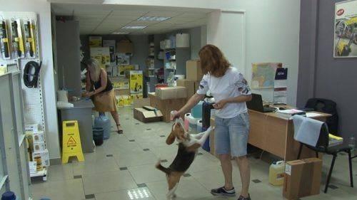 Черкасці всьоме долучилися до Всесвітньої акції «Візьми собаку на роботу»