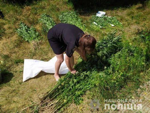 Черкащанин удома вирощував майже 600 кущів коноплі (фото)