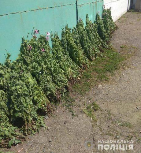 На Черкащині жінки вирощували плантації снодійного маку (фото)