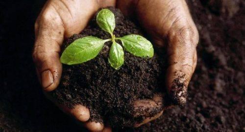 У ґрунті на Черкащині виявили перевищення нітратів