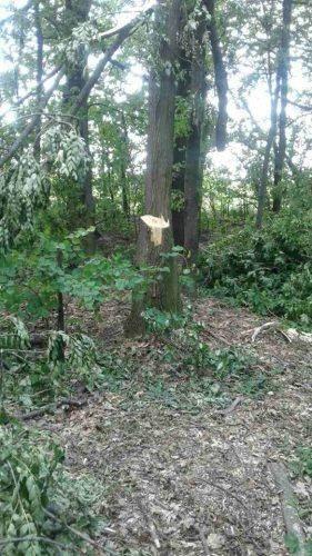 На Черкащині незаконно вирубували ліс (фото)