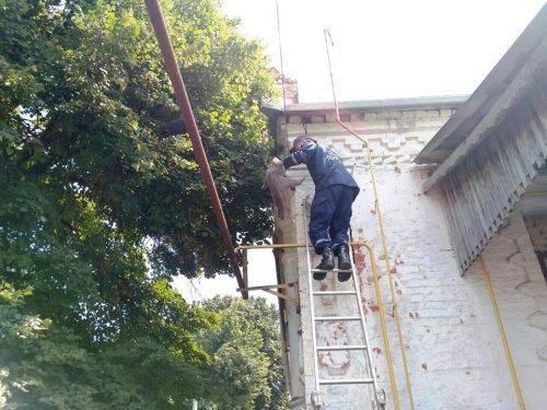 На Черкащині з дерева рятували кота, а з ями собаку (фото)