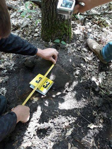 На Черкащині виявили масштабну вирубку лісу (фото, відео)