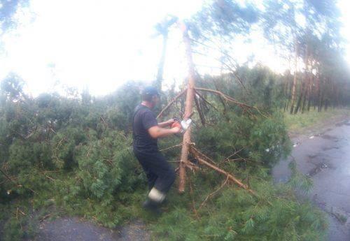У Черкасах дерево впало на проїзну частину (фото)