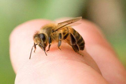 На Черкащині від укусу бджоли помер чоловік
