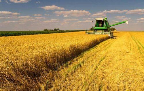 На Черкащині триває збір зернових та зернобобових культур