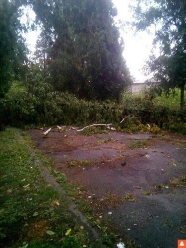 Повалені дерева та зірвані дахи: наслідки негоди на Черкащині (фото)