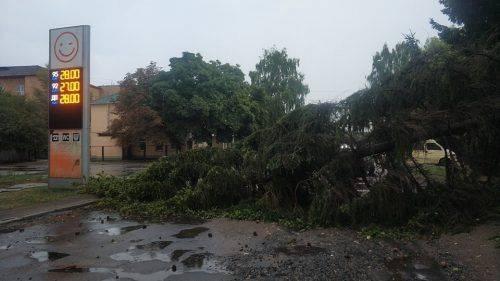 Падіння дерев та пориви ліній електропередач: у Золотоноші частина міста залишилася без світла через негоду