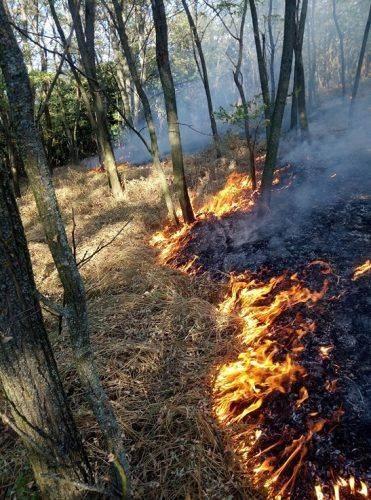 У Трахтемирові під Каневом пожежа знищила залишки старовинного вітряного млина (фото)