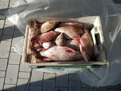 На Черкащині браконьєри наловили риби майже на 20 тисяч гривень (фото)