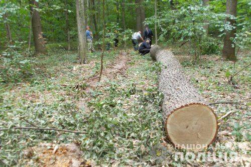 На Черкащині в причепі вантажівки знайшли незаконно зрубані дерева (фото)