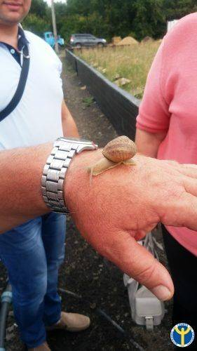 Гастрономічний делікатес: на Черкащині почали вирощувати равликів (фото)