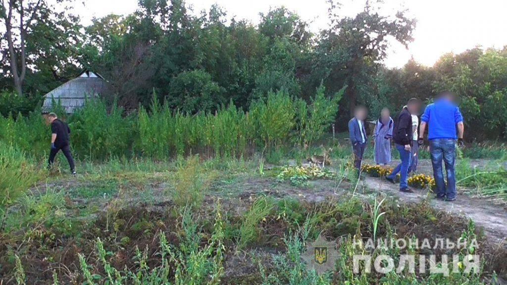 Черкащанин вирощував плантації коноплі (фото)