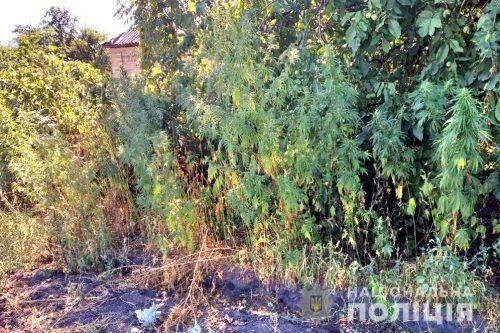 Черкащанин удома вирощував коноплю (фото)