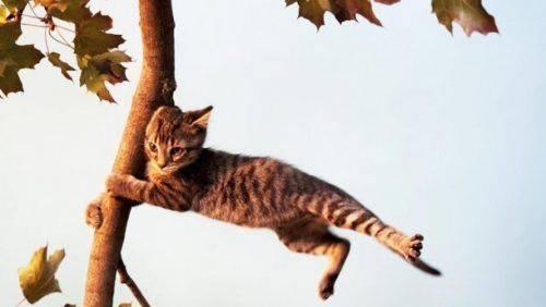 Черкащан попереджають про сильний вітер