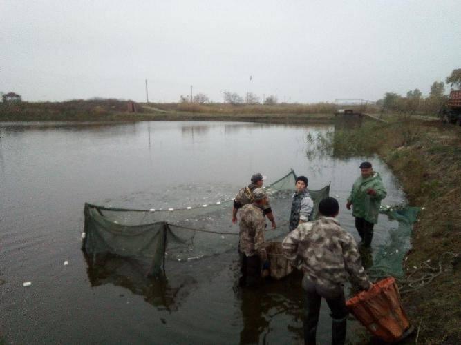 У Кременчуцьке водосховище вселили 200 тисяч екземплярів риб