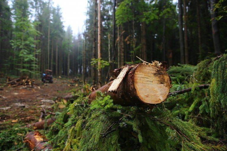 На Черкащині лісівник накрав дерев майже на мільйон гривень