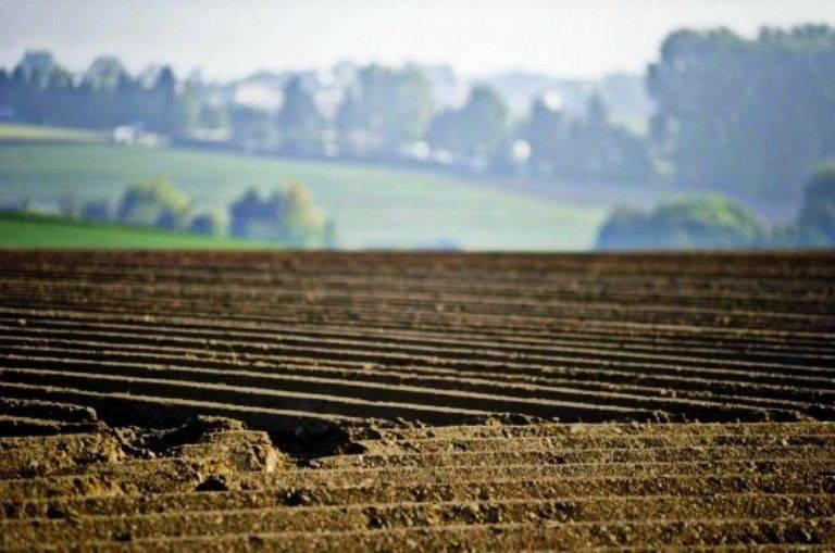 На Уманщині фермер заборгував державі 8 мільйонів гривень