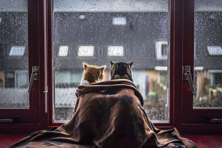 На вихідних на Черкащині буде дощ