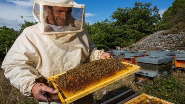 Бджолярам Черкащини хочуть надсилати СМС-повідомлення у разі загрози життю бджіл