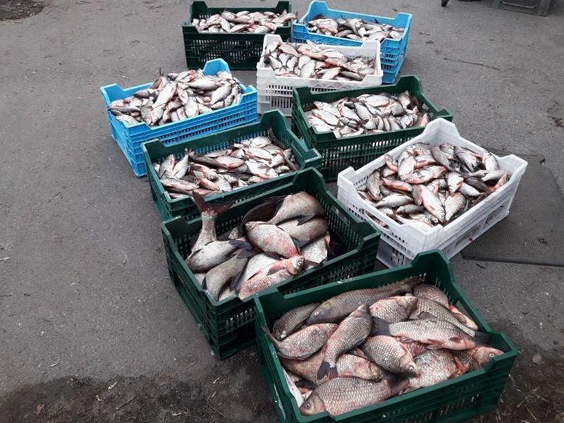 На Черкащині працівник парку ловив рибу, яку мав охороняти