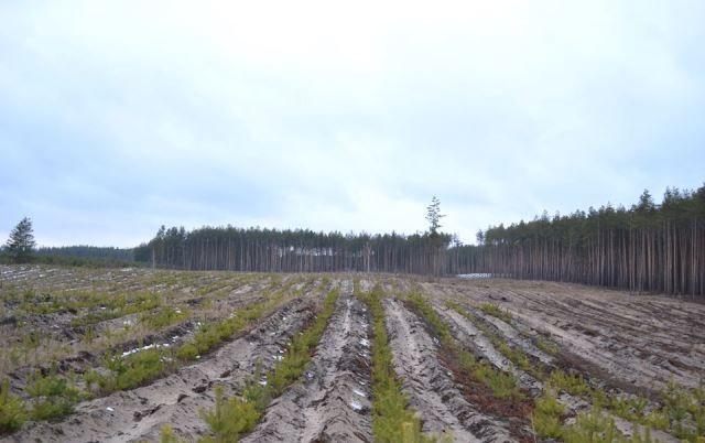 Весняна лісокультурна кампанія на Черкащині уже на старті