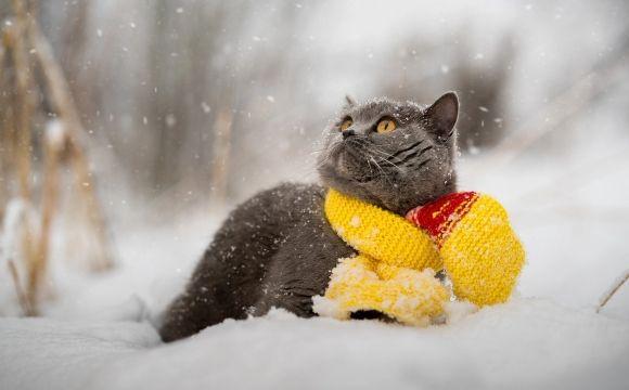Зимовий режим погоди на Черкащині так і не встановився
