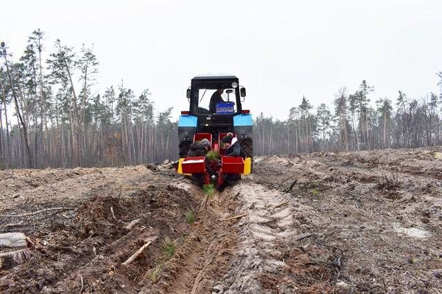 На Черкащині висадили плантацію новорічних ялинок