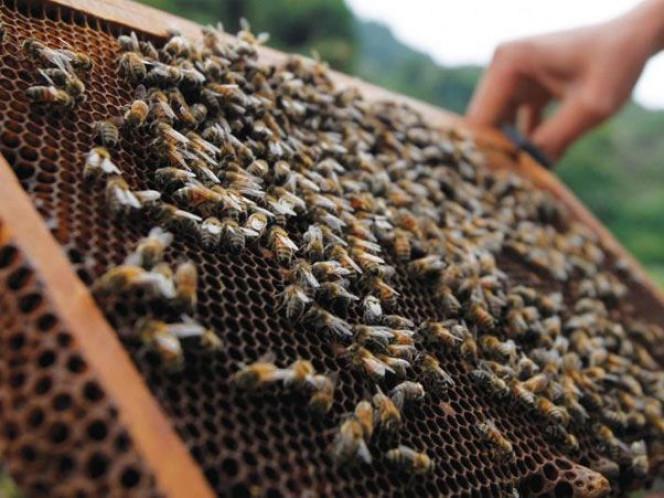 Бджолярі та агровиробники Черкащини узгоджували застосування засобів захисту рослин