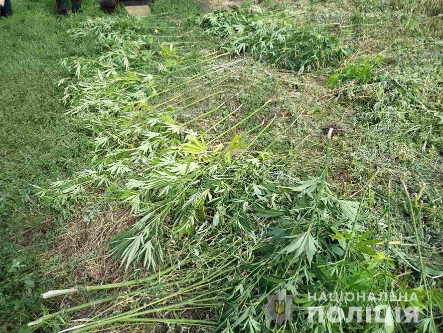 Черкащанин вирощував на городі угіддя коноплі (фото)