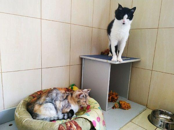 """""""Кототерапія"""": черкащани можуть врятувати тварин із притулку обіймами"""