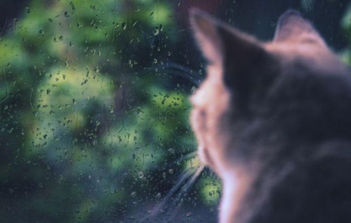 """""""Дощі та грози"""": яку погоду очікувати черкащанам з понеділка"""