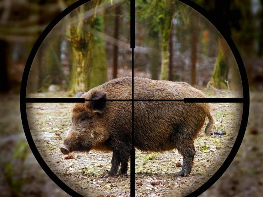 На Черкащині охорона лісгоспів склала 67 протоколів на порушників правил полювання