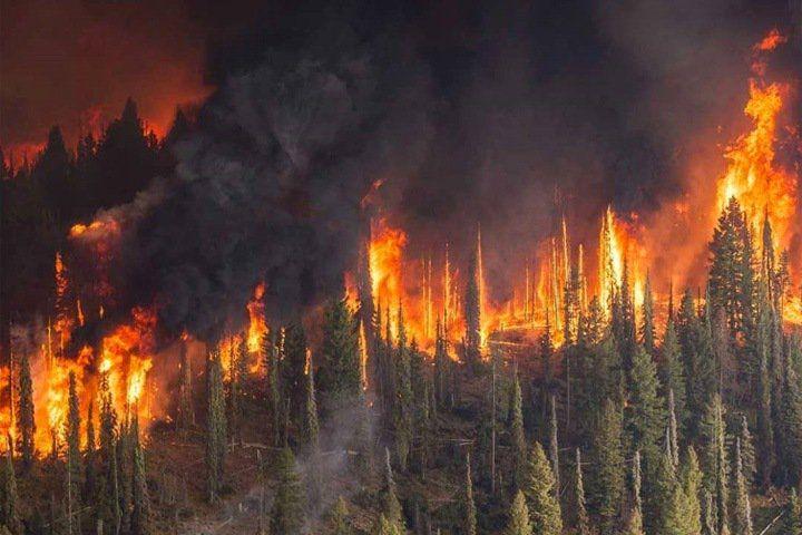 У лісах Черкащини – надзвичайна пожежна небезпека