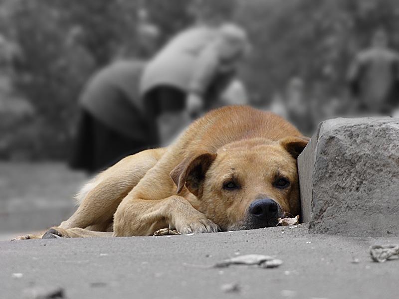 Черкащан просять допомагати безхатнім тваринам вижити в холодну пору року