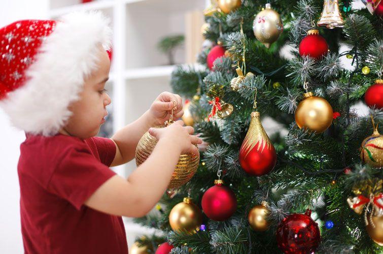 Жива чи штучна: яку обрати та скільки доведеться витратити черкащанам на новорічну ялинку
