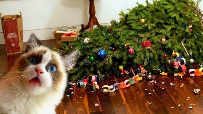 """Коти проти ялинок: як черкасцям вберегти новорічне дерево від """"пухнастих"""" атак"""