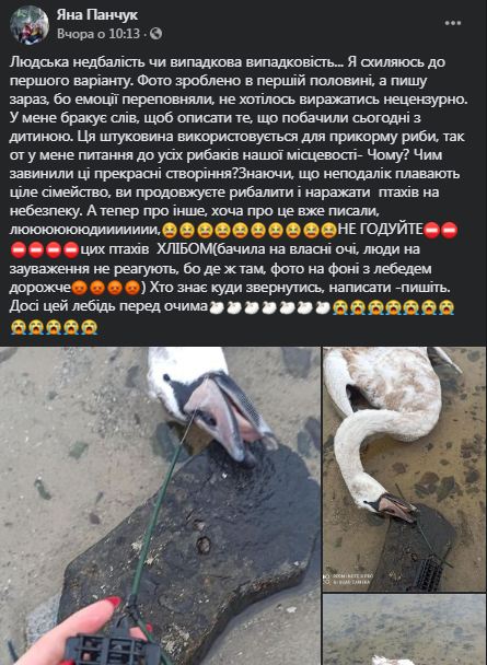 Канівчани у жорстокій смерті лебедів звинувачують рибаків і працівників ДСНС