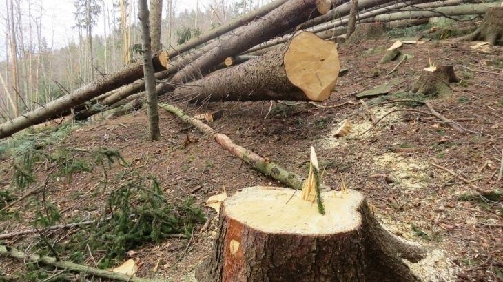 На Черкащині двох чоловіків впіймали за вирубкою лісу (фото)