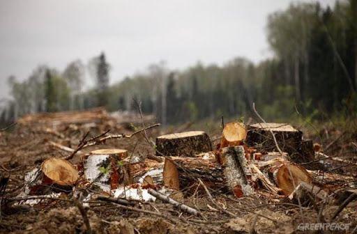 Черкащанина судитимуть за незаконну порубку дерев