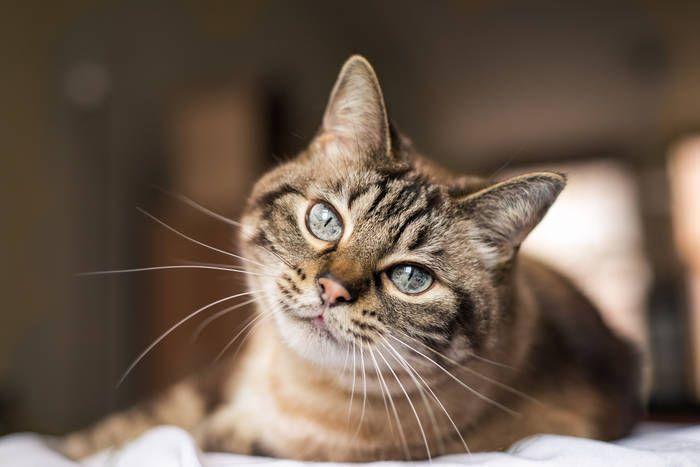 В Умані коти можуть стати частиною екосистеми міста