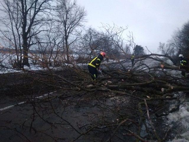 На Черкащині дерево впало на дорогу